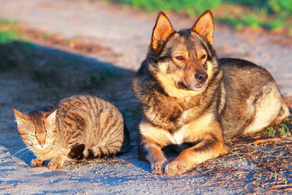 Vitamine D3 voor je hond voor je kat