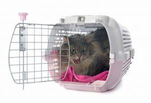 Kat zit boos in reismand